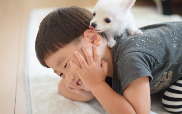 株式会社ジャストライト浪岡 智がお送りする四字熟語の「口耳之学」についてのイメージ画像